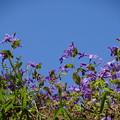写真: 春は 幻・・・