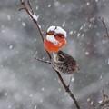 写真: 雪  ですね・・・