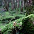 写真: 白駒池の自然の中で