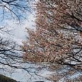 Photos: 2009_0329_102956AA