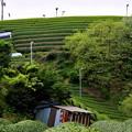 Photos: 2017_0501_135600 宇治田原の茶畑