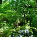 Photos: 2017_0528_152017 御手洗川と糺の森