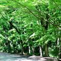 Photos: 2017_0528_152645 糺の森