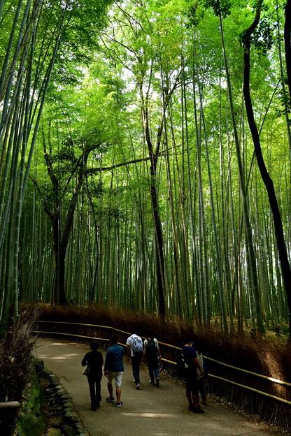 2017_0924_132521 竹林の小径