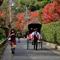 写真: 2017_1125_123453 嵐山