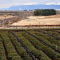 2018_0114_122205 碾茶畑-流れ橋-比叡山