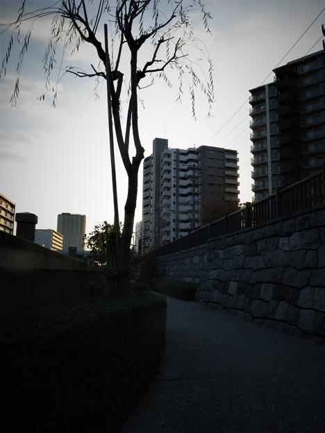 小名木川遊歩道