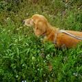写真: 草むらを