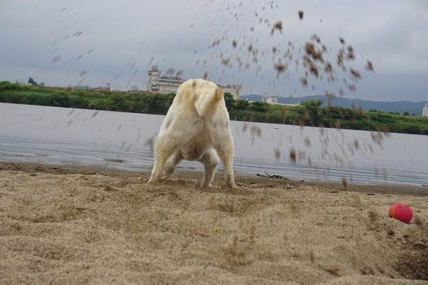 砂をかけるな