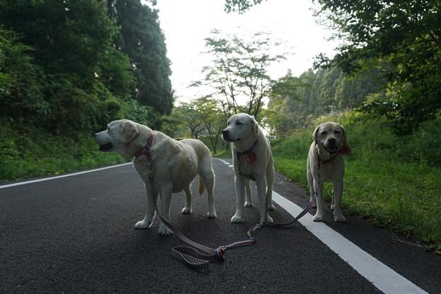 5時から散歩