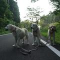 Photos: 5時から散歩