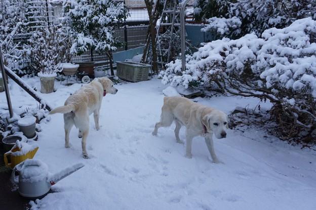 雪の降った朝