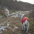 Photos: 寒い日