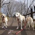 Photos: 公園の散歩道
