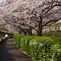 写真: 春日