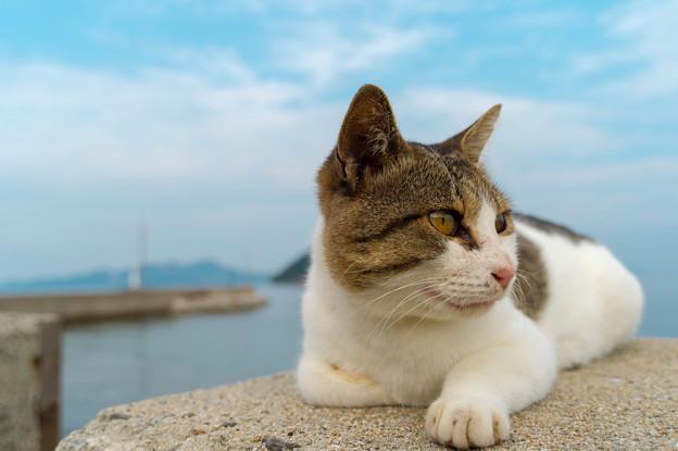 佐柳島の猫ちゃん