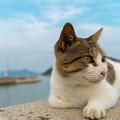 写真: 佐柳島の猫ちゃん