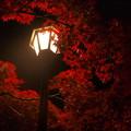 写真: 弥彦公園