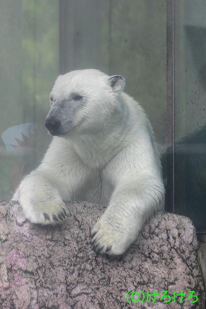 今日はどうやってシュートをきめようかな。(とくしま動物園・ポロロ)