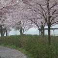 写真: 霞と桜2