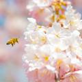 写真: 春、みーつけたっ