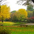 写真: 昭和紀念公園