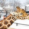 写真: 旭山動物園