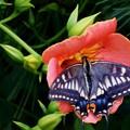 花と蝶ー2