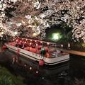 IMG_2874 桜と遊覧船