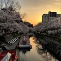 IMG_2835  黄昏の松川