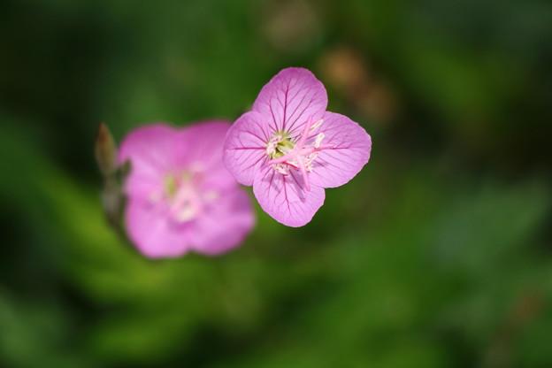 IMG_7808 足元の花