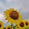 写真: IMG_0828 求む太陽
