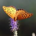写真: 花と蝶 IMG_4389