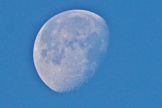 今朝の月 IMG_8915