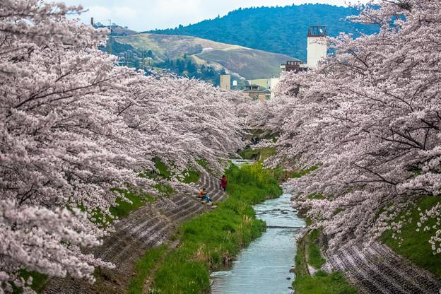 写真: 櫻花河堤