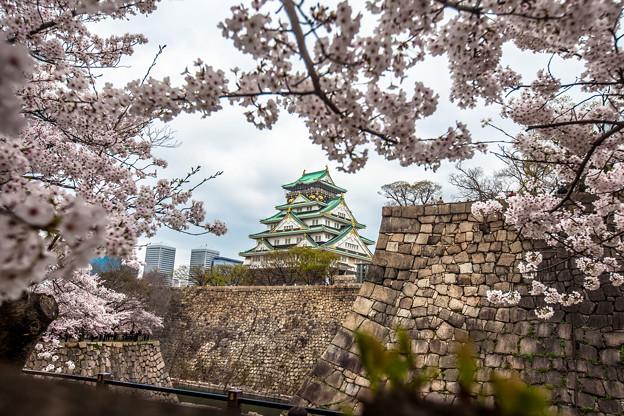 写真: 大阪城之櫻