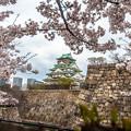 大阪城之櫻