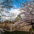 大阪城櫻之美