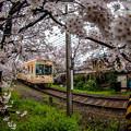 櫻花鐵路2
