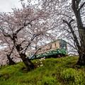 櫻花鐵路3