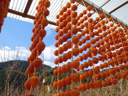 串柿の里2017 002