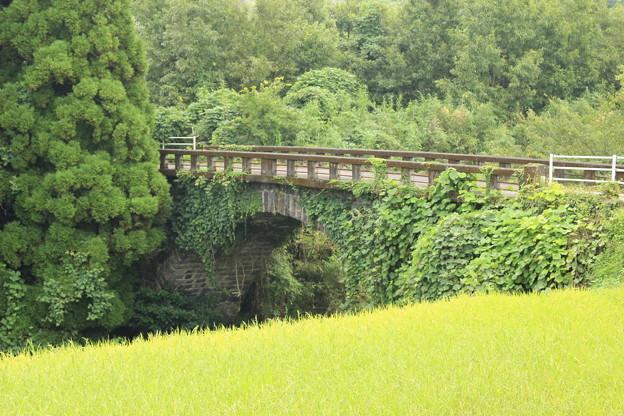 稲穂越しに見る住吉橋