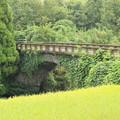 写真: 稲穂越しに見る住吉橋