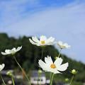 写真: 秋空に・・・