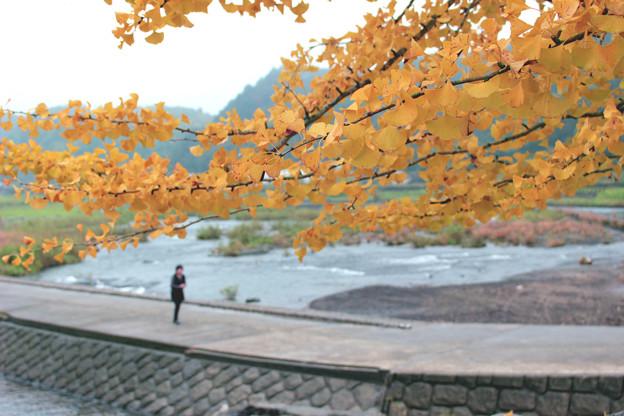 「原尻の滝」の秋2