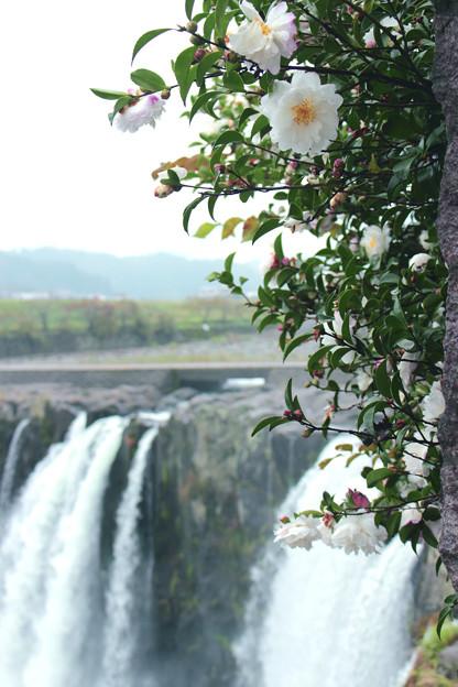 「原尻の滝」の秋4