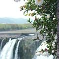写真: 「原尻の滝」の秋4