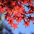 写真: 紅葉2