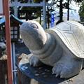 Photos: なで亀