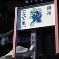 Photos: ニータンとなで亀